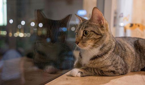 10-11-Cat\'s-Cafe-(4)