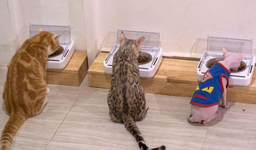 10-11-Cat\'s-Cafe-(5)
