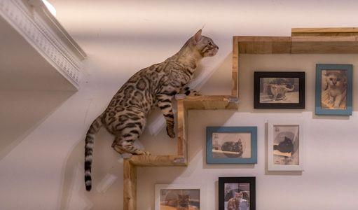 10-11-Cat\'s-Cafe-(7)