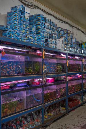 10-11-Pet\'s-shops-(2)