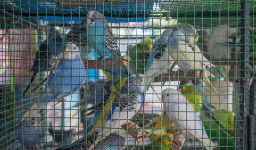 10-11-Pet\'s-shops-(4)