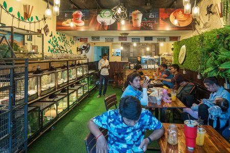10-11-Reptiles-Cafe-(11)
