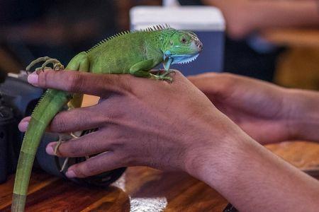 10-11-Reptiles-Cafe-(5)