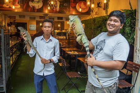 10-11-Reptiles-Cafe-(6)