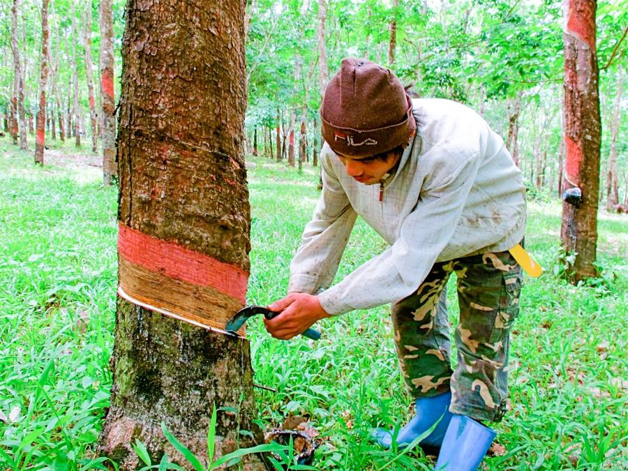 Thailand maintains rubber exports despite floods - Khmer Times