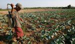 Farmer-use-herbicide
