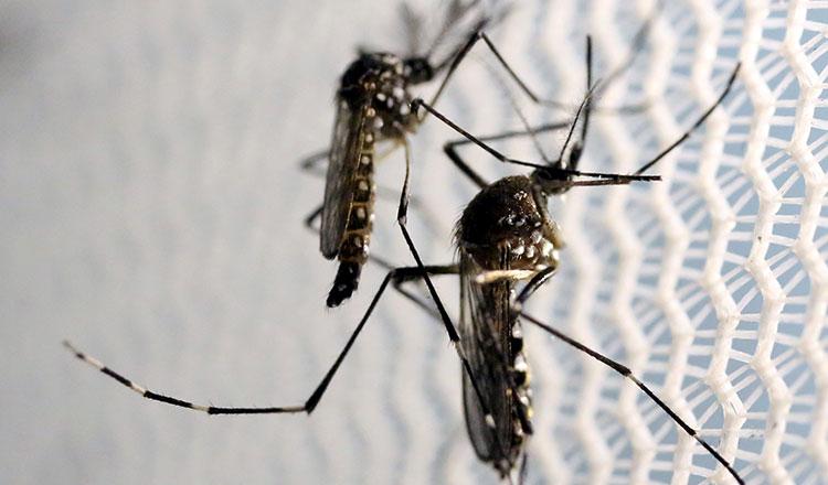 Dengue Fever Infects La Fte De >> Dracula Dengue And Death Khmer Times