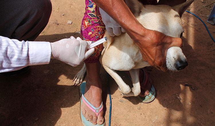 Sterilise my pet: Do I have to? - Khmer Times