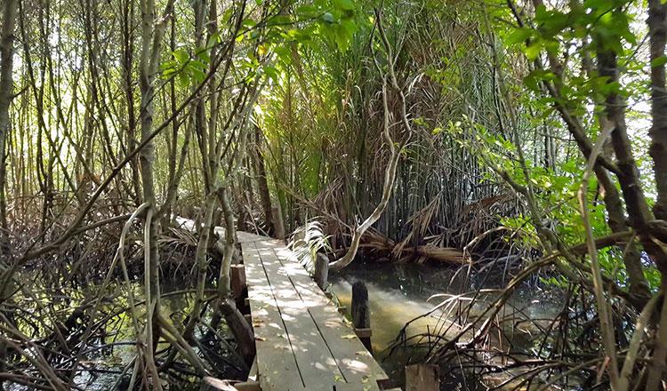 Cambodia Mangroves