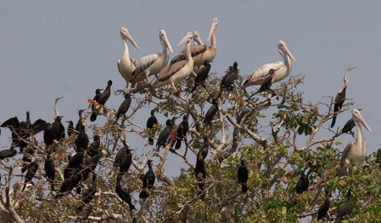 Prek Toal Bird Sanctuary in upwind - Khmer Times