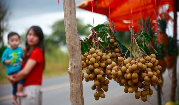 Pailin longan