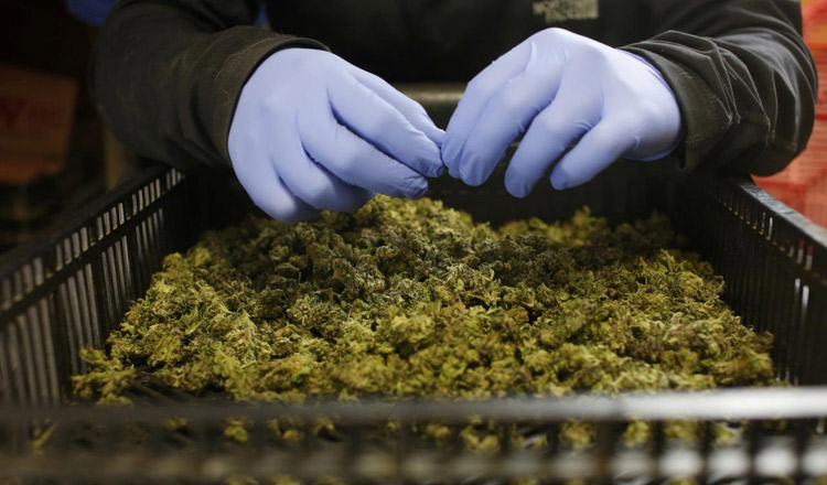 Israel to approve medical cannabis exports - Khmer Times