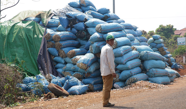 Cassava farmers rejoice as going organic pays off - Khmer Times