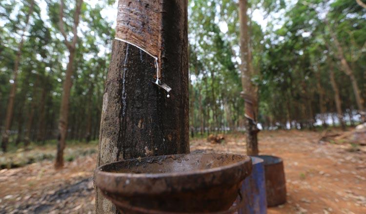 Vietnam's rubber exports drop in May