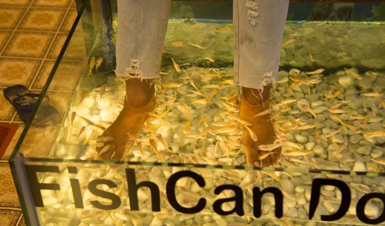 Fish Massage. GT2/Taing Rinith