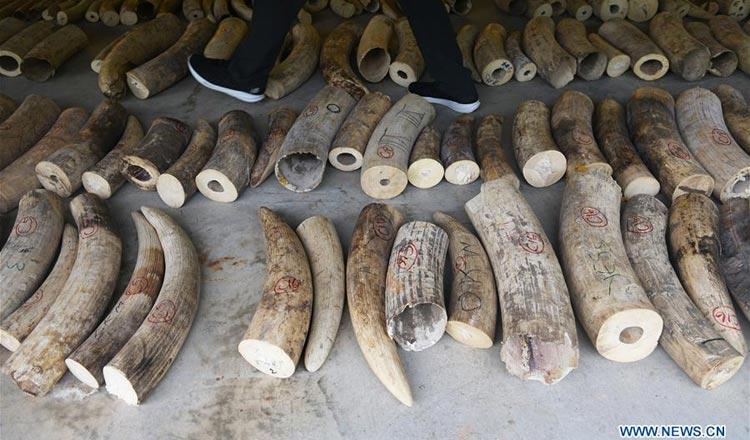 Singapore Ivory