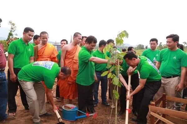 Try Pheap plant tree