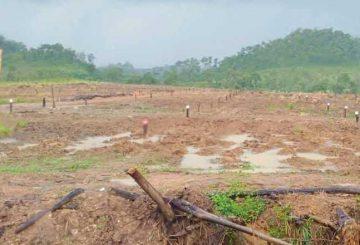 land grabing
